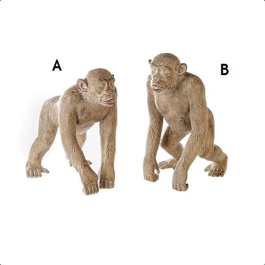 Apina A hyllykoriste